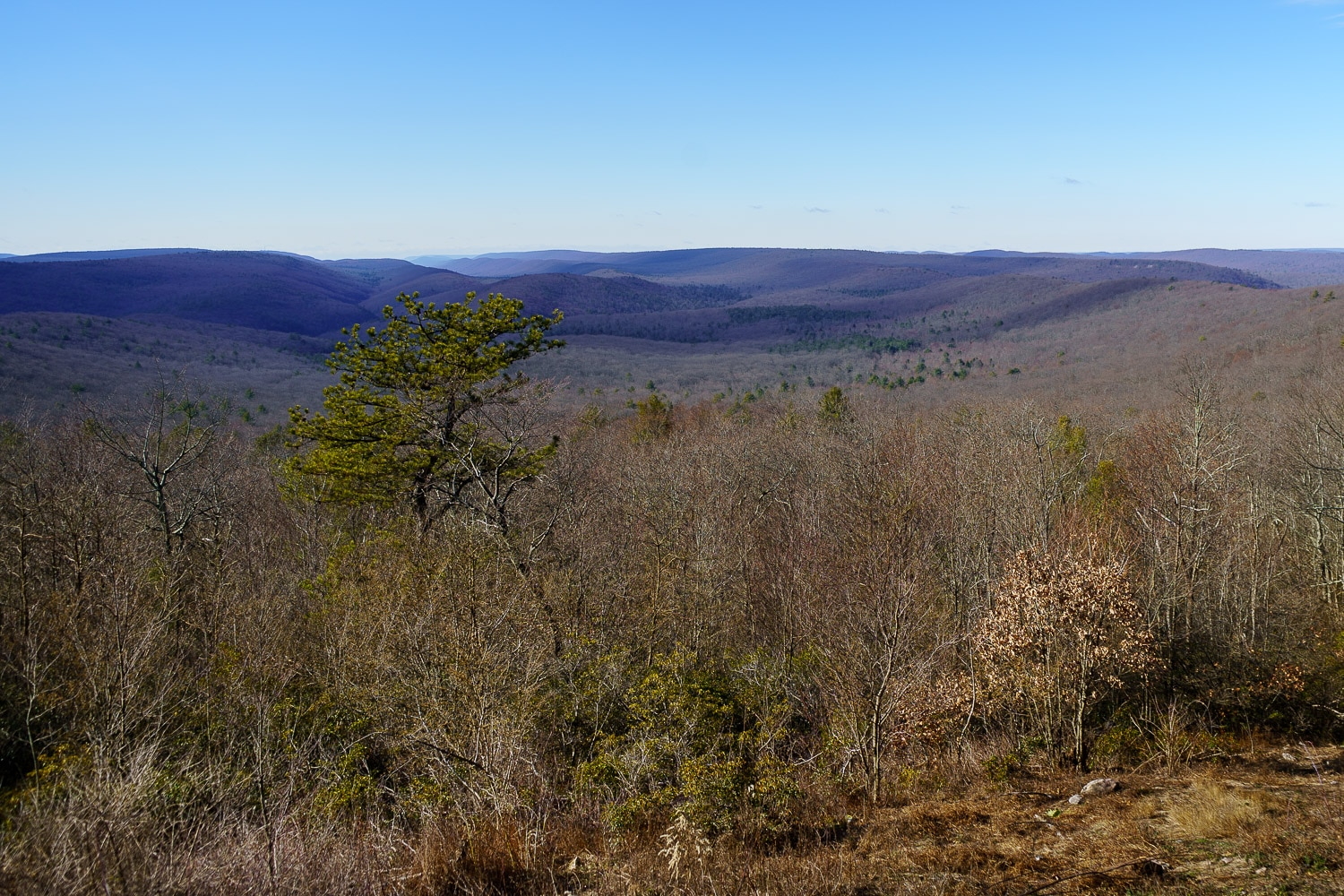 The Hook natural area vista, looking into a few hundred acres of forests.