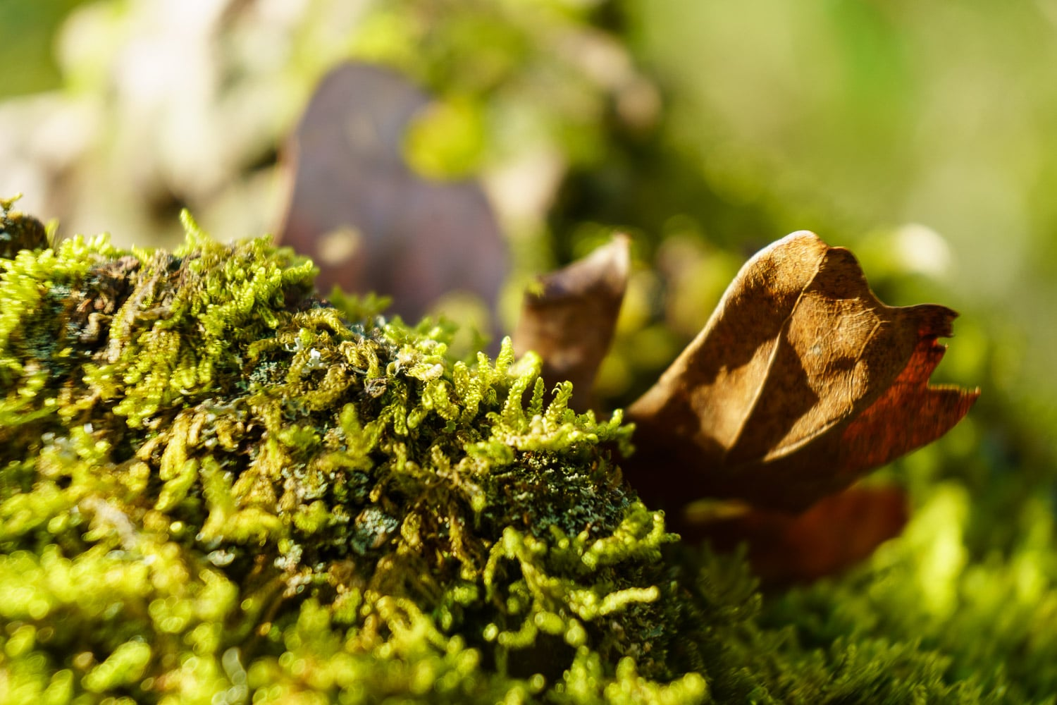 A macro photo of a leaf and some moss.