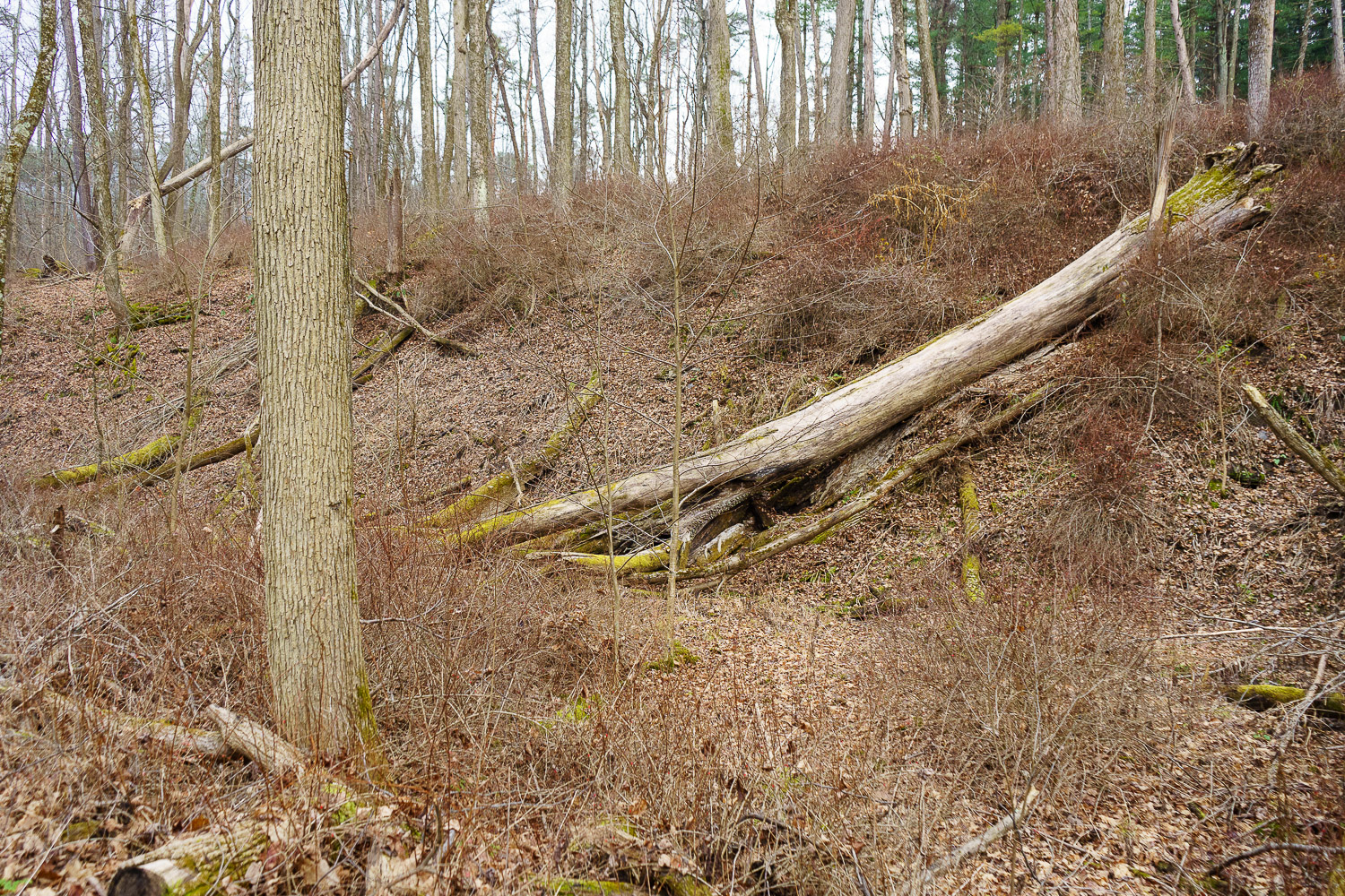 Trees have fallen, some due to erosion, beside the trail