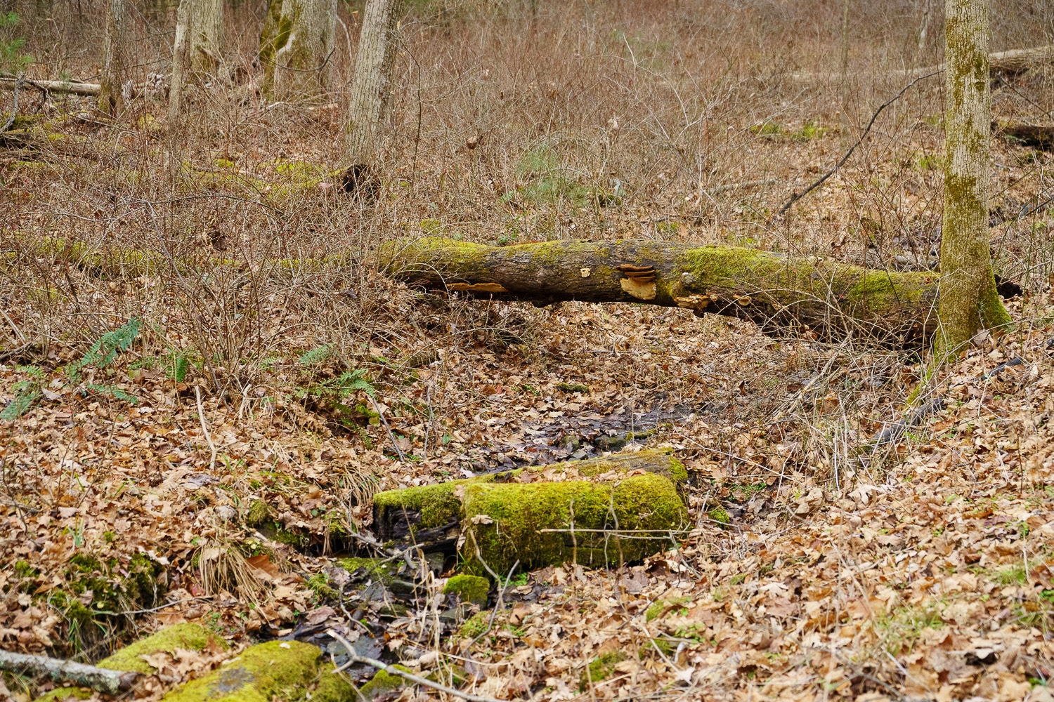 Mossy logs above a creek