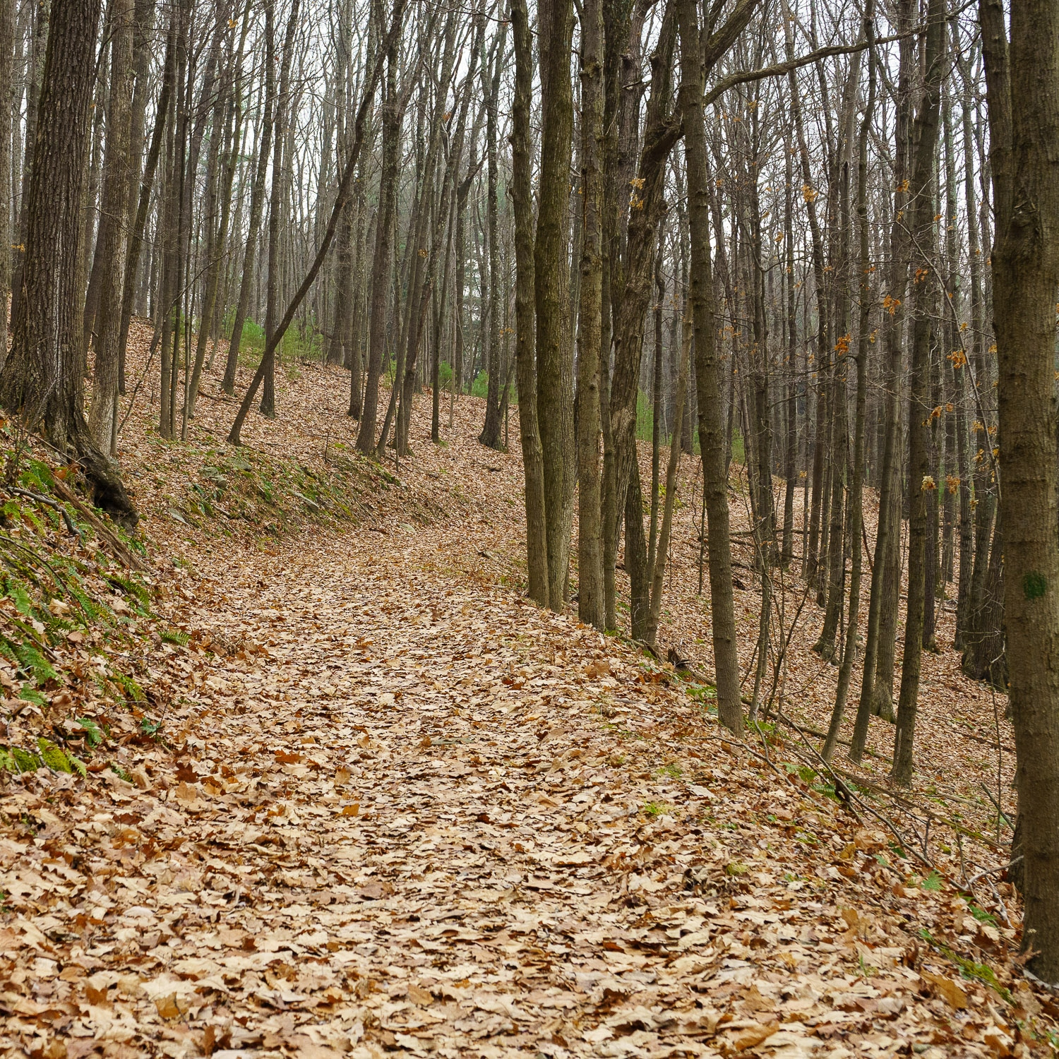 The trail twists and turns up the mountian