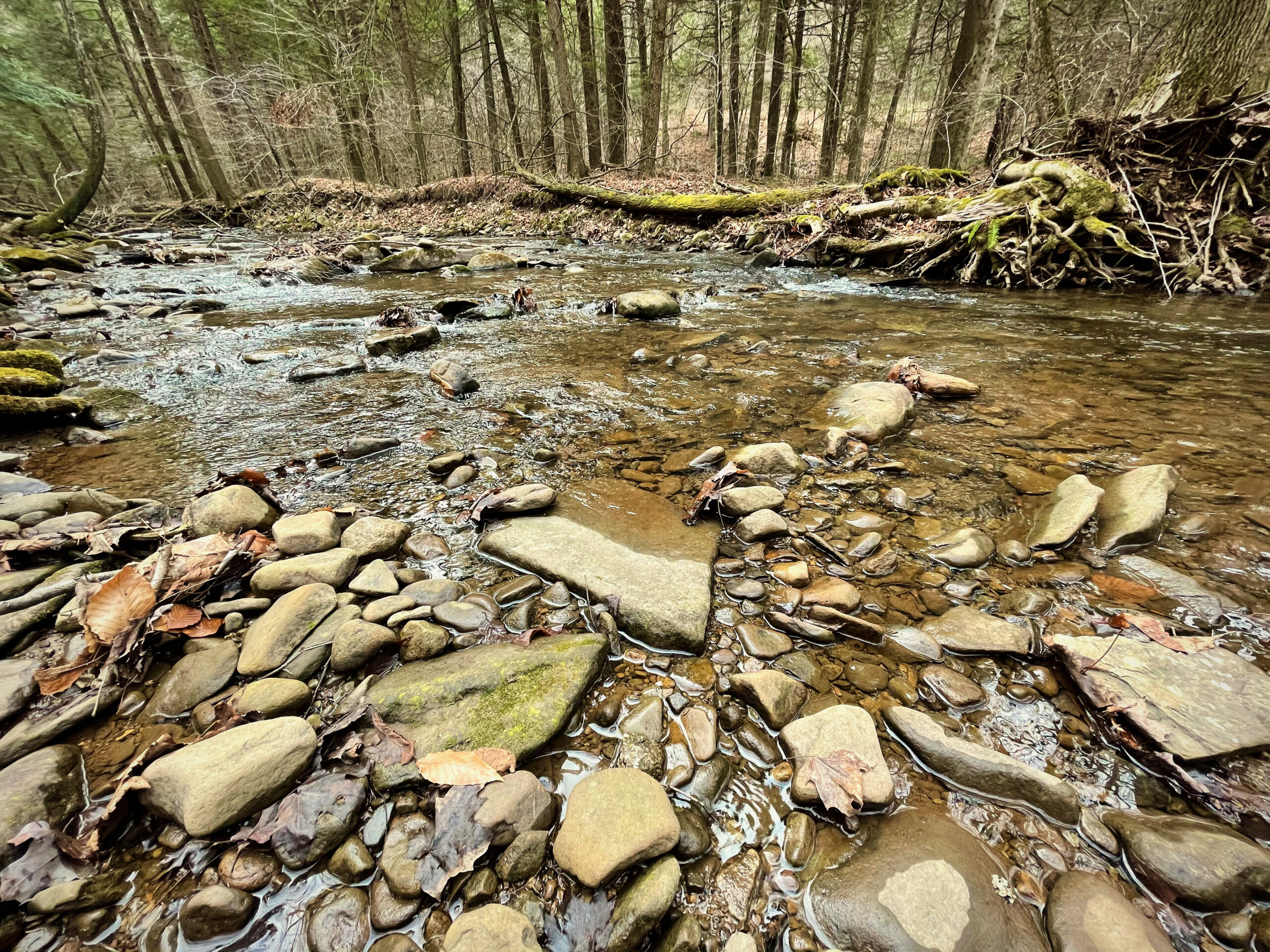 Ogdonia Creek with a wide-angle lens